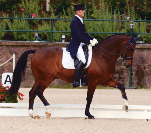 CLASSICALLY ELEGANT: Correct upper-body position is effective as well as aesthetically pleasing. Olympian Guenter Seidel (riding Pandango at the 2012 USEF Dressage Festival of Champions) is known for his near-perfect equitation.